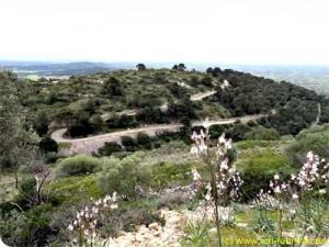 Mallorca_Randa_Berg_001_4k